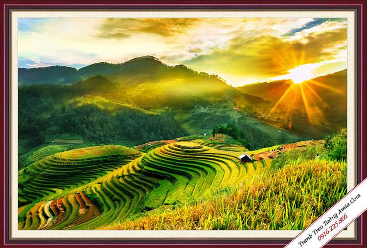 tranh dep ruong lua bac thang phong canh viet nam