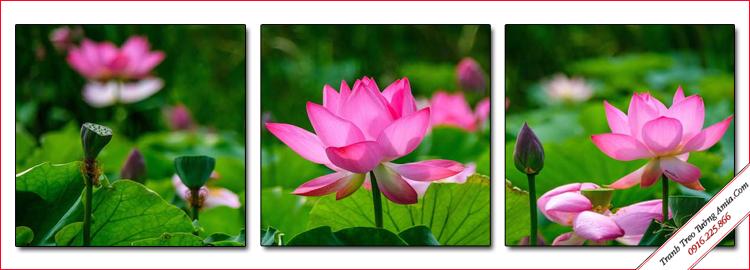 tranh phong canh dep trong dam hoa sen