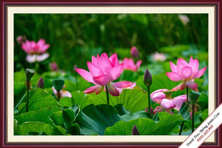 tranh phong canh hoa sen trong dam