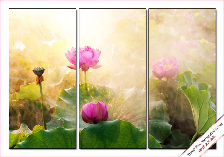 tranh dep phong canh dam hoa sen trong som mai