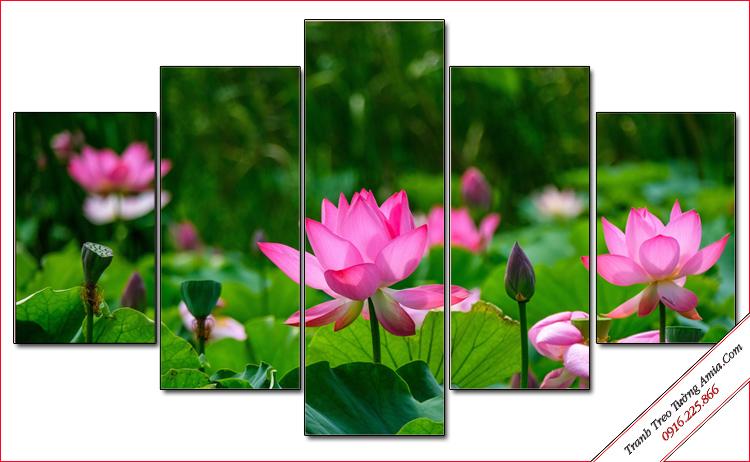 tranh phong canh hoa sen ghep bo 5 tam
