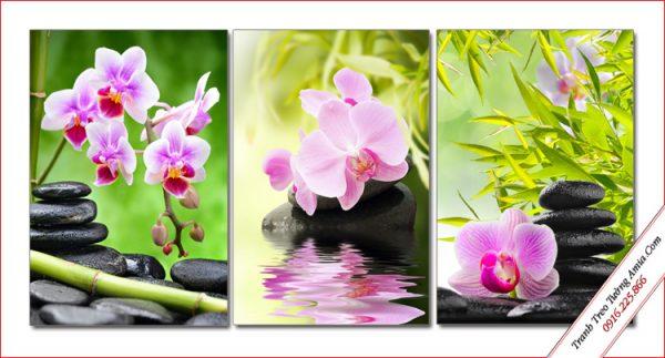 tranh dep treo tuong spa hoa lan ho diep