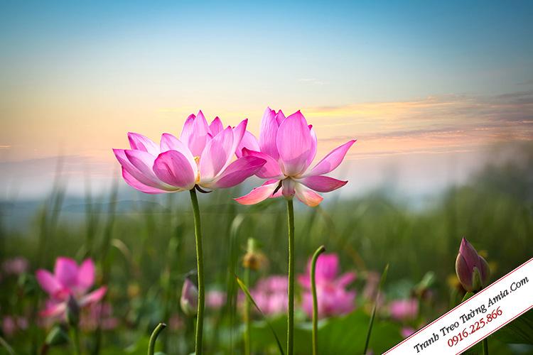 tranh hoa sen ghep bo treo tuong dep