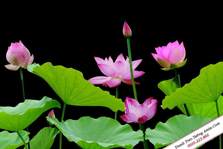 Tranh hoa Sen treo tường ghép bộ 3 tấm Amia 365