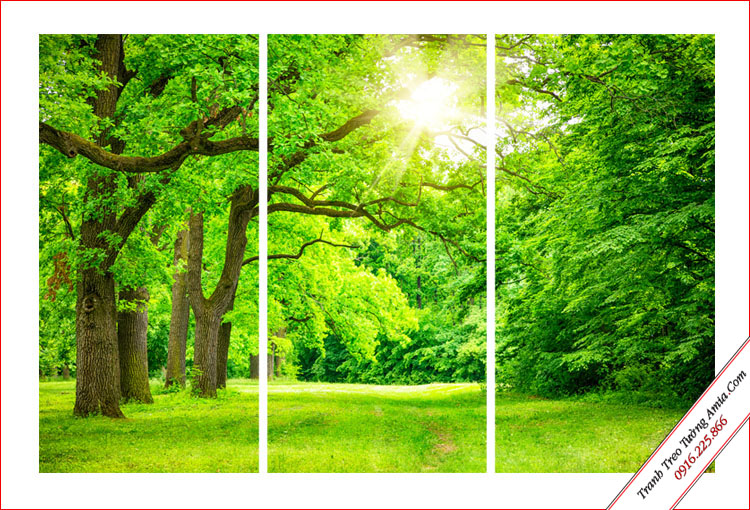 tranh phong canh rung cay xanh hop menh