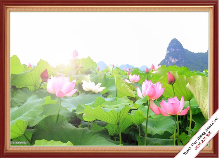 tranh phong canh dam hoa sen treo tuong kho mot tam