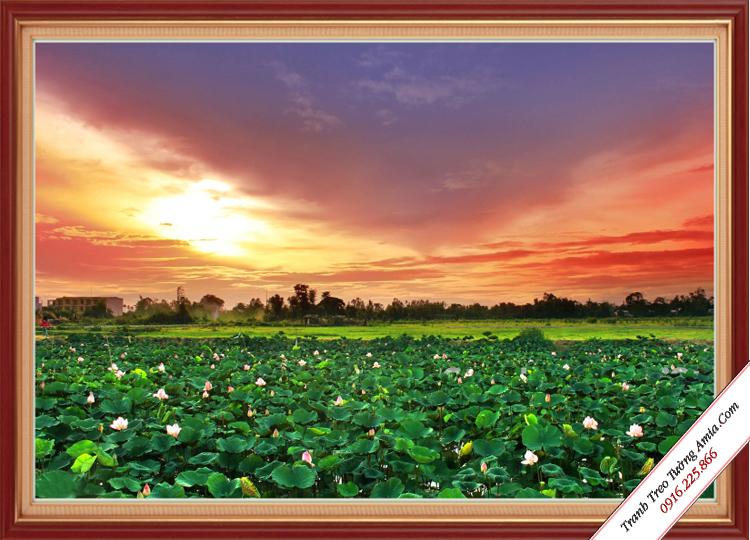tranh treo tuong phong khach phong canh dam hoa sen trang